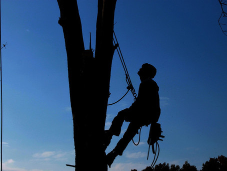 The Importance of Hiring a Professional Tree Service