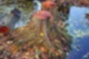 autumn-942791_1280.jpg