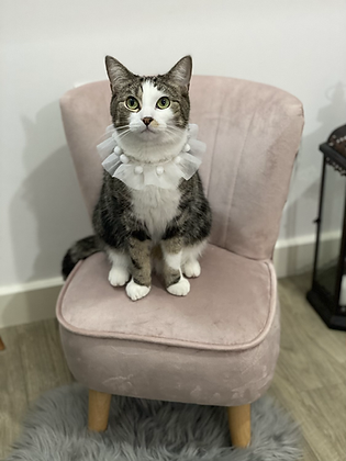 Paws Boutique LoungeSeat