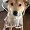 Thumbnail: Puppy Raincoat