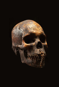 Trophy skull, Fly River, Papuan Gulf