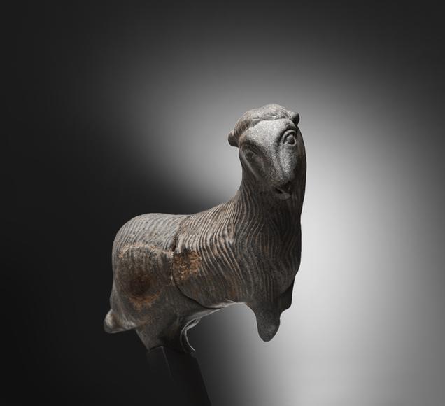 Bactrian Goat