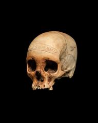 Trophy skull, Purari Delta, Papuan Gulf