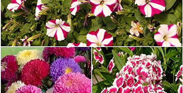 High Impact Bedding Winter Flowers-3 Packets