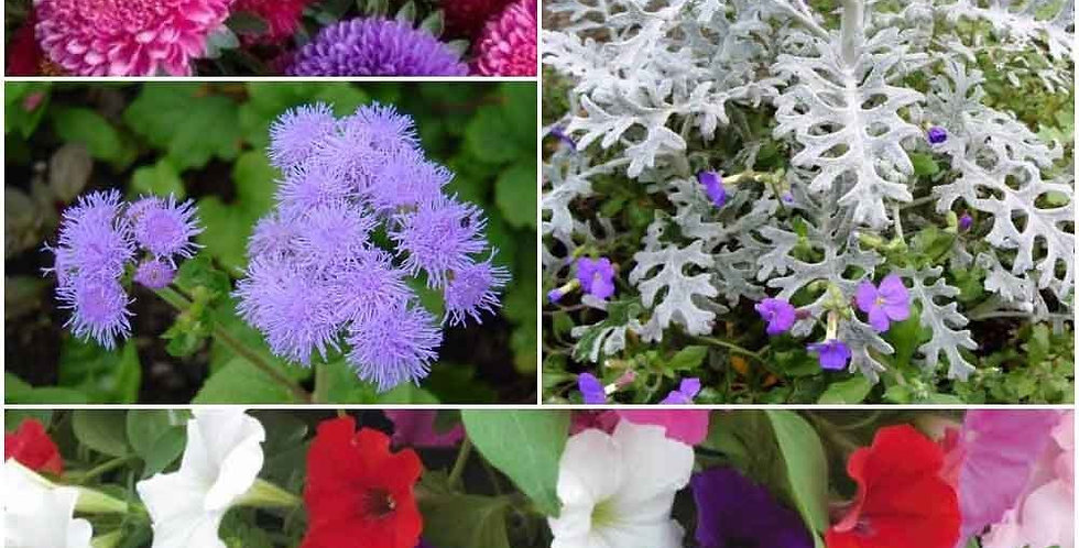Pot Plants Winter Flowers- 4 Packets