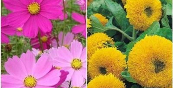 Summer Flowers Seeds for Borders -2 Packets