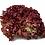 Thumbnail: Lettuce Lollo Rosso