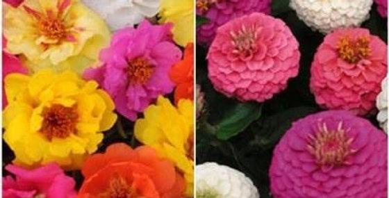 Summer Flowers Seeds - 2 Packets