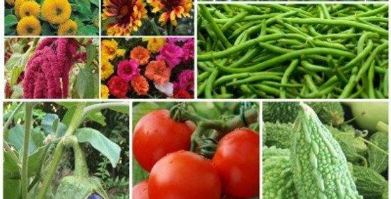 Biocarve Perfect Summer kitchen Garden Kit - 10 Packets