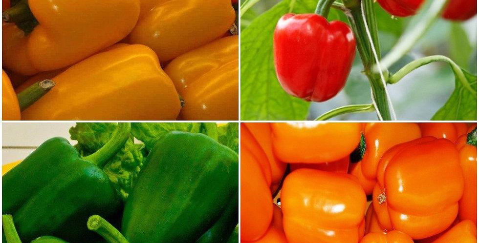 Capsicum Vegetable Kit -4 Packets