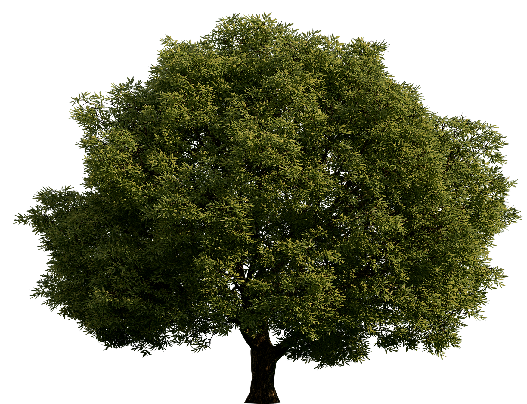 Realistic_Green_Tree_PNG_Clip_Art-1102_e