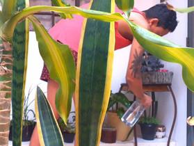 """""""Solitário"""" apresenta a relação íntima entre pessoas e plantas na pandemia"""