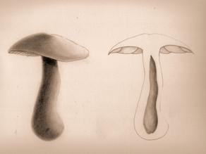 A fungi illustration