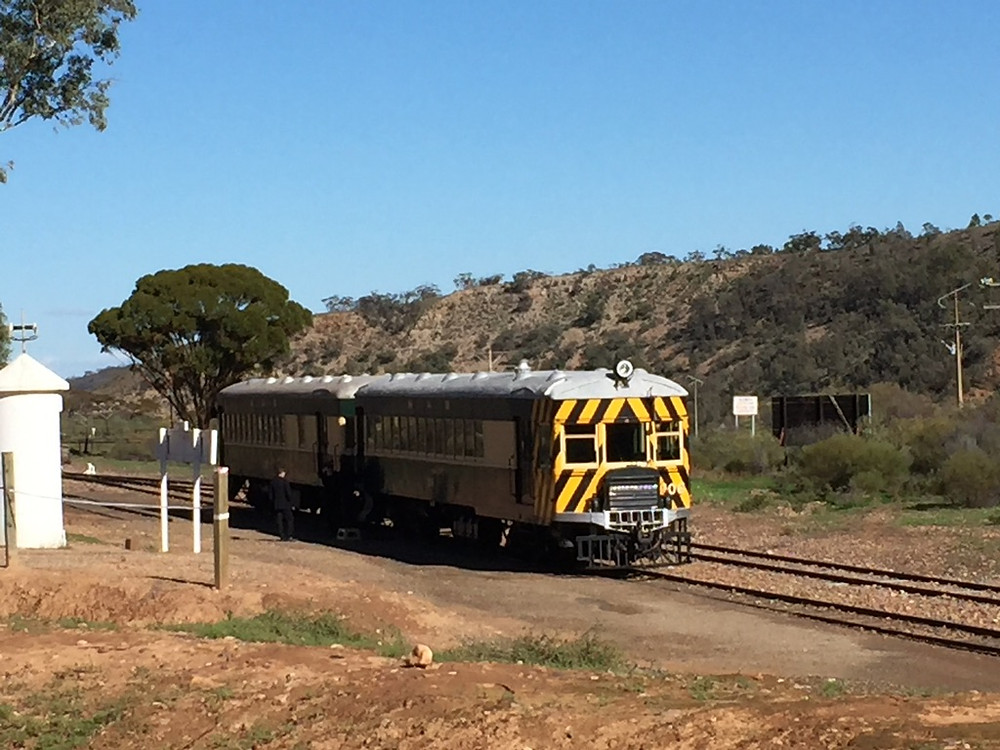 The train wound its way through low rolling hills of eucalypts and xanthorreas.
