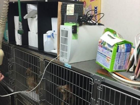動物病院での実験