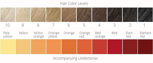 hair levels.png
