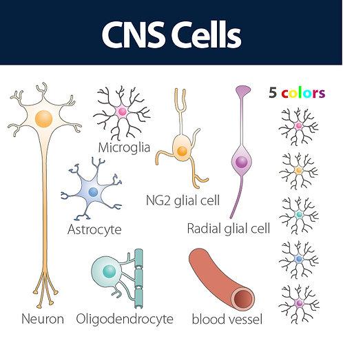 CNS cells
