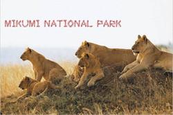 Mikumi-National-Park_fonts