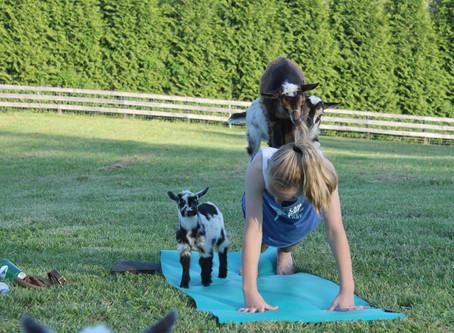 Goat Yoga Photos - April 2019