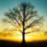 iPad-Wallpaper-Tree-2.jpg