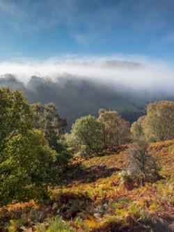 Hillside near Llangollen