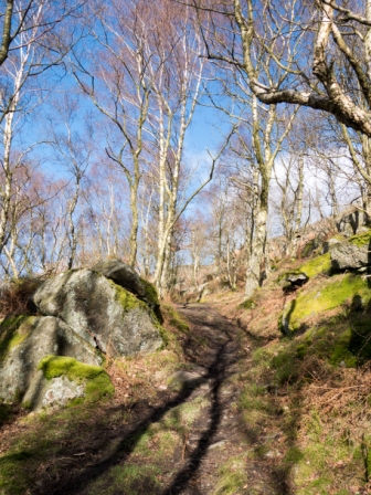 Woods below Curbar Edge