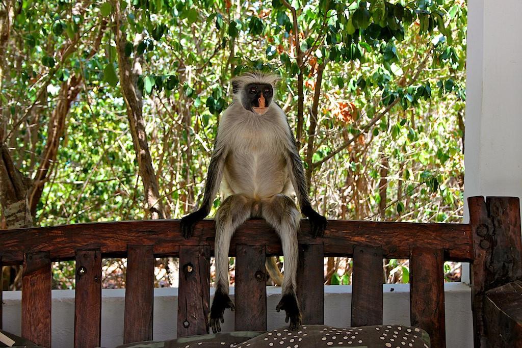 Monkey on sofa