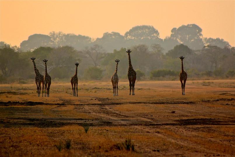 Morning walking safari