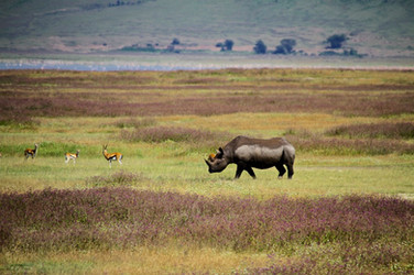 Green season rhino2
