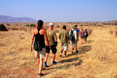 Walking safari in Ruaha