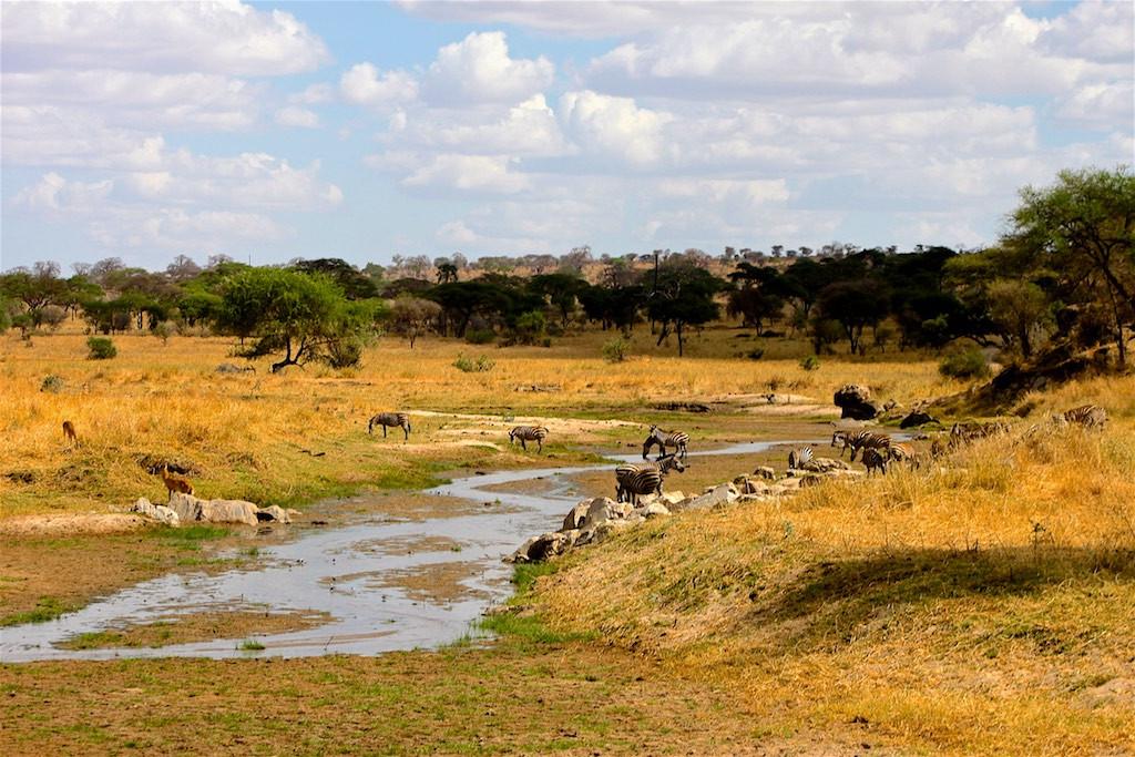 Dry season Tarangire