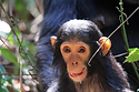 CHIMP.png
