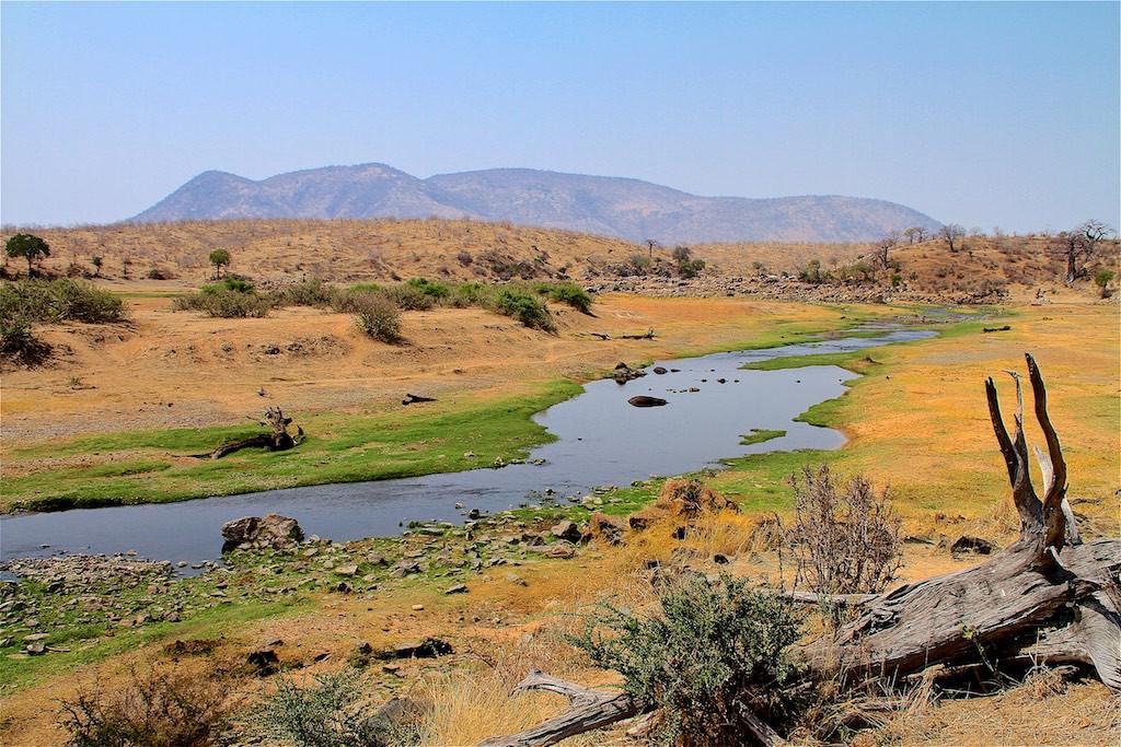 Walking safari by Ruaha River