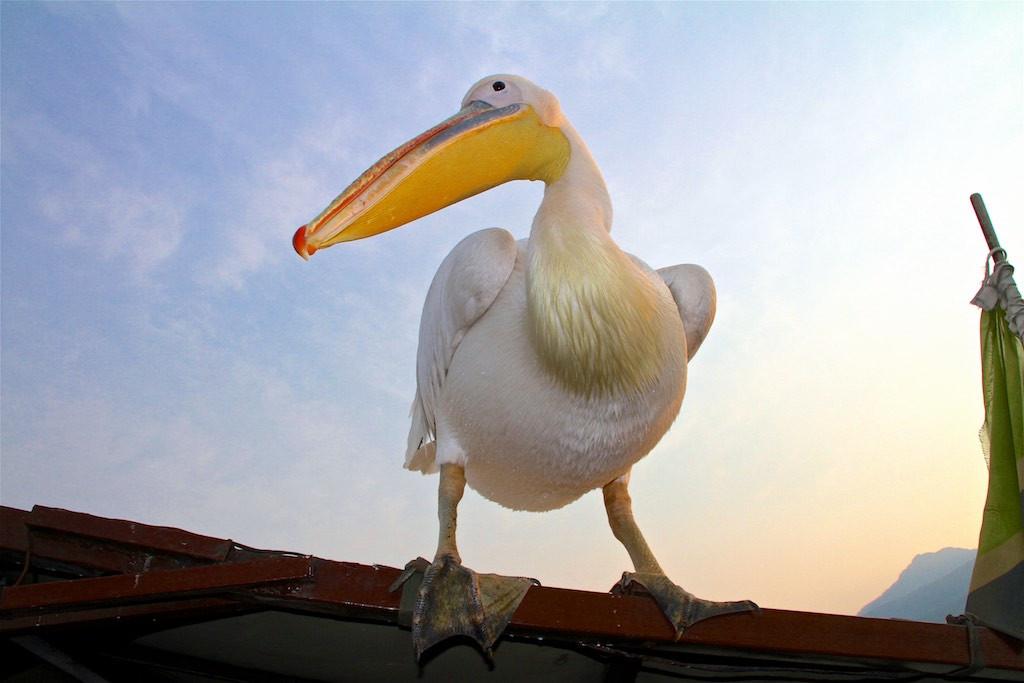 RIP Big Bird