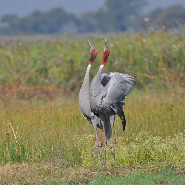 Migratory patterns of birds