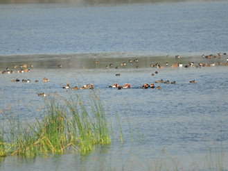 Sirpur Lake and bird sanctuary – A Treasure in our neighbourhood