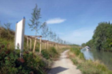 Renouvellement des plantations du Canal du Midi (34)