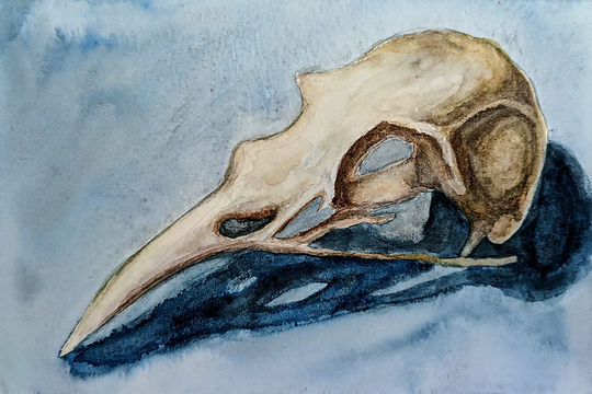 bird skull - Carolyn Baskis.jpeg