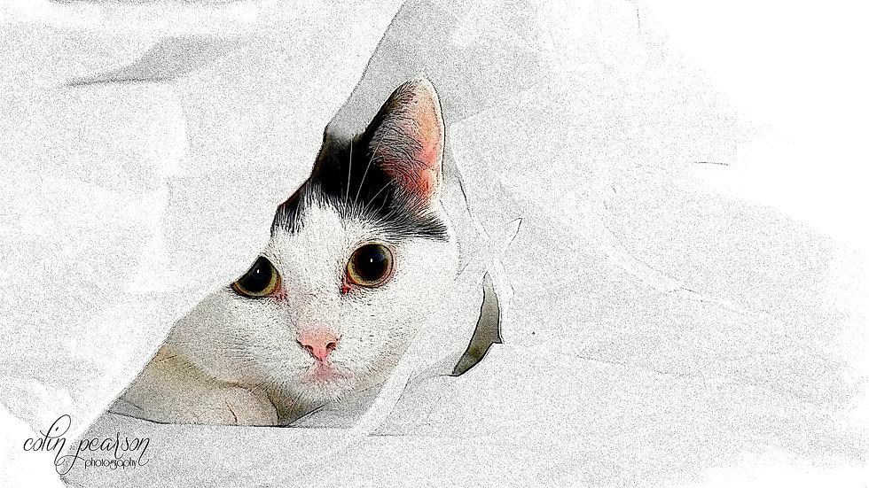 charcoal-cat.jpg