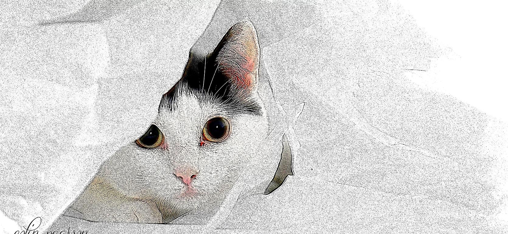 pet-portraits.webp