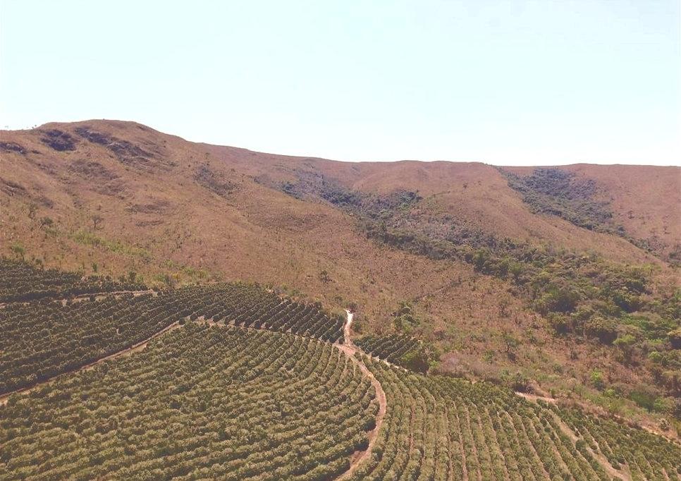 Foto da Fazenda da Café Selo Verde chamada São Geraldo localizado no Alto de Boa Esperança, Minas Gerais