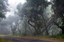 Cloud Forest_dsc02427.jpg