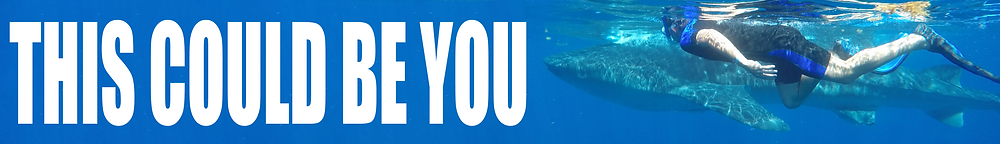 Banner for Whale Shark Tours. Click here to learn more about Kay Tours' Whale Shark Encounter