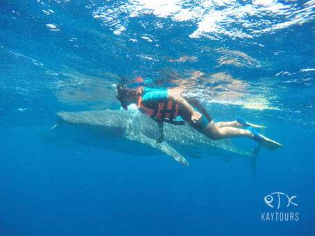 Are whale sharks safe to swim with?