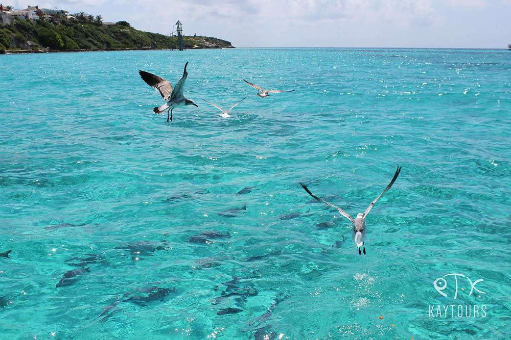 Seagulls flying above vibrant blue waters of the Caribbean Islan Isla Mujeres