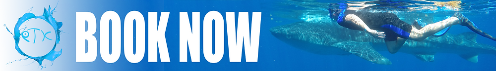 "Banner showing a person swimming next to a whale shark with call to action ""Book now"""