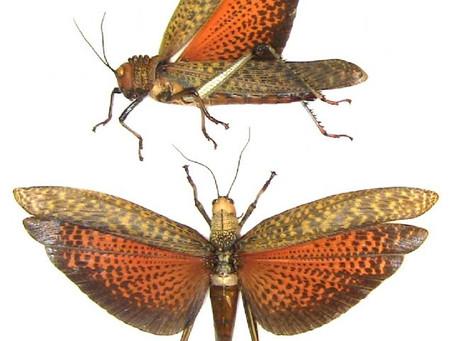 Locust encircle Mexico's Cancun, Playa del Carmen & Riviera Maya Resorts