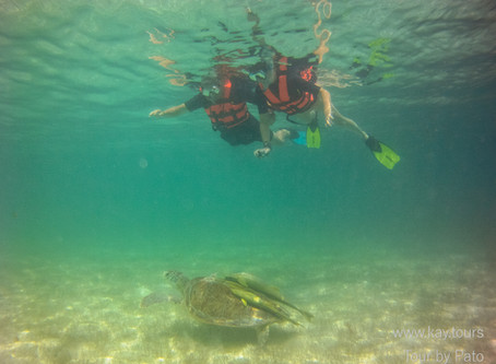 Why We Are Back Swimming With Turtles In Akumal Again (Updated July 2020)