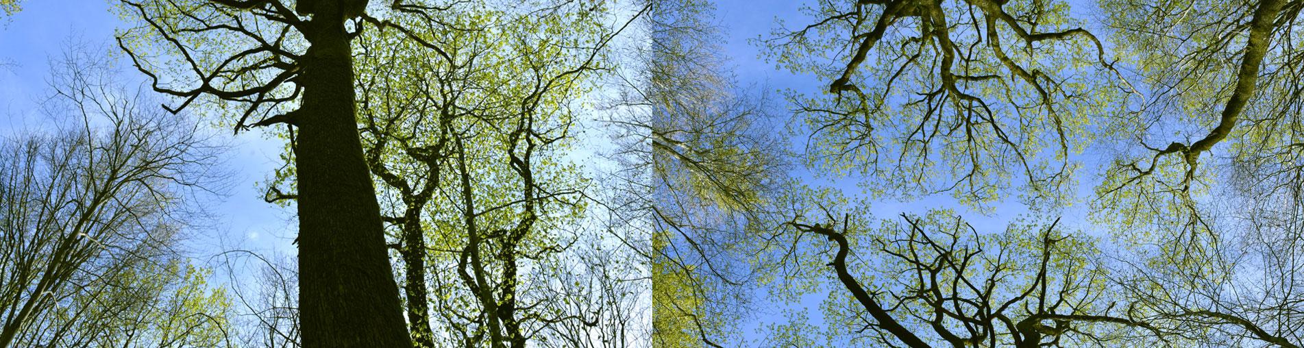 + de Nature | Paysage