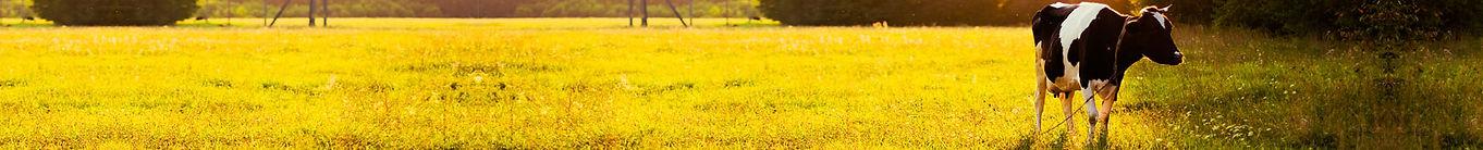 Antioxidantes Alimentos Agropecuarios